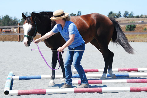 Leading a horse in Labyrinth groundwork exercise in TTouch Method Elegant Elephant leading position