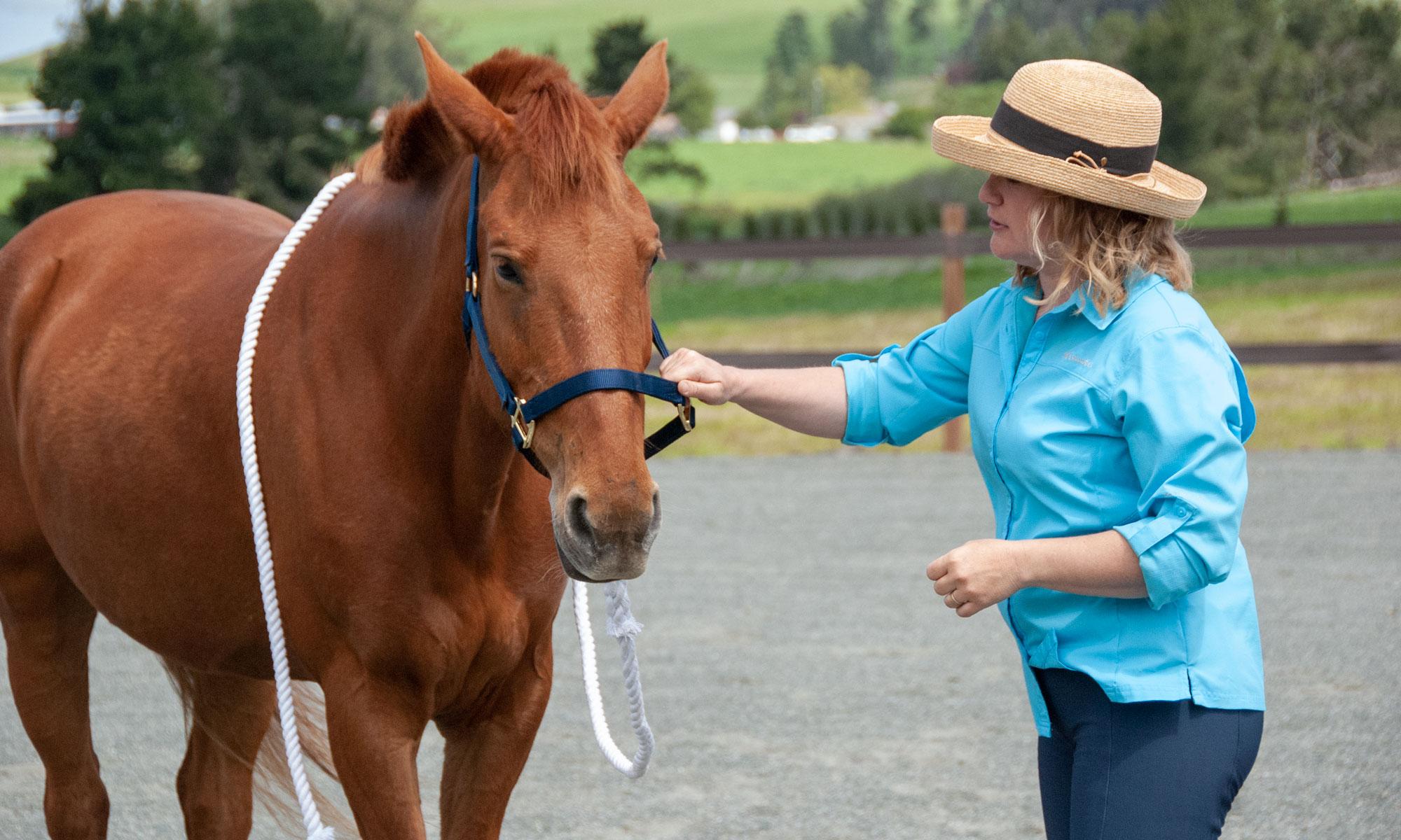 Kathleen Aspenns Equine Wellness Practitioner